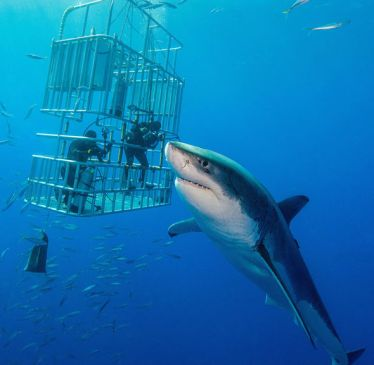 S-Cape-Tourism-Route-Shark-Cage-1